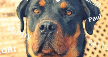 Die beliebtesten Hundenamen / Weibchen und Rüden