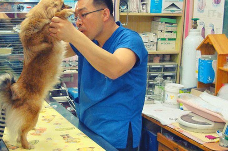 Krankheiten beim Hund - Tierarzt