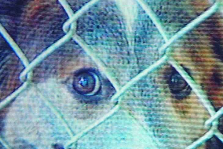 Hund aus dem Tierheim - In Not