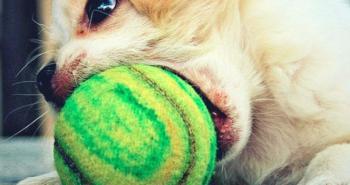 Hund verschluckt Spielzeug - was tun?
