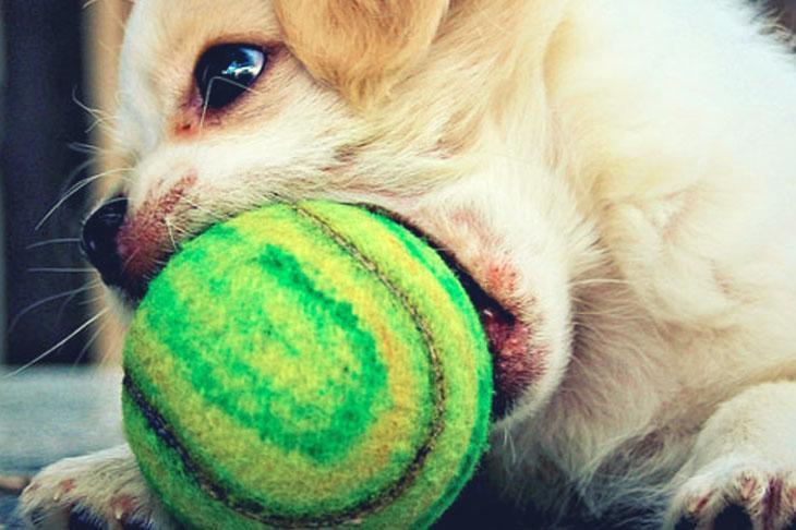 Hund verschluckt spielzeug was tun