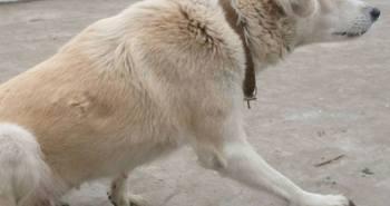 Hundesprache - Verhalten beim Hund verstehen