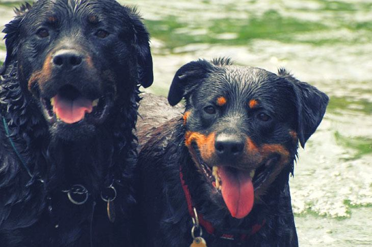 Hundesprache - die Lautsprache