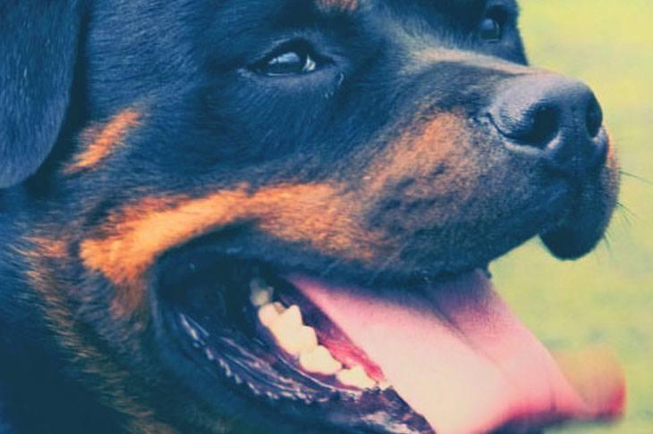 Vorgestellt: Agila - Hundeversicherung
