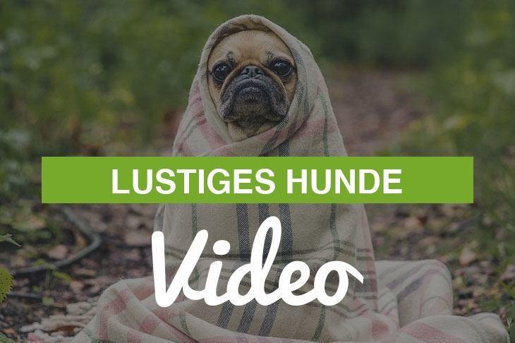 lustiges Hunde Video